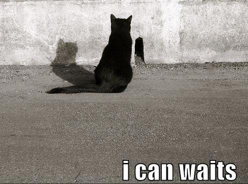 Cat waits